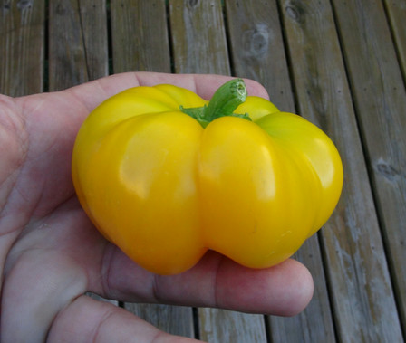 Here is the Paradicsom Alaku Sarga Szentes Pepper, Capsicum annuum, Scoville units: 000 SHU. One of the truly great Hungarian peppers. Yellow, flat and ribbed, This pumpkin shaped fruit has the tremendous flavor that peppers from Hungary are famous for. The flesh is very thick, crisp and juicy. This rare variety was collected at a farmers' market in Matrafured, Hungary, but developed at Szentes, Hungary. Plants are short and stocky getting to about 30 inches tall but bushy. This is one of our more popular peppers we sell and hard to keep in stock! This is winning variety. Open pollinated 75 days.
