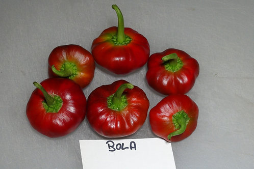 Here is the Bola Pepper CAP 1655 also known as Rotfruechtig Pepper, Capsicum annuum, Scoville Units: 100 to 3,000 SHU. This