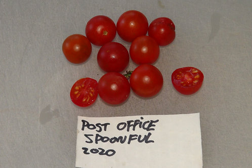 Here is the Post Office Spoonful Tomato, Solanum lycopersicum. This tomato originates from Pittsburgh Pennsylvania USA. Here