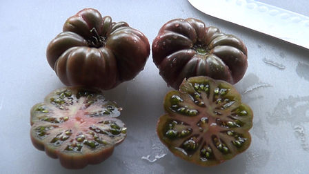 """Here is the Purple Calabash Tomato , Solanum lycopersicum. This tomato originates from Mexico and it's history dates as far back to the pre-Columbian era! The first mention of it was by Thomas Jefferson in his notes in 1781 """" Jefferson grew his tomatoes at Monticello in 1809 - the first summer of his retirement - and grew them until his death. The ribbed, bulbous, and scarred Purple Calabash tomato dates back to pre-Columbian Mexico."""" This tomato is considered a """"flat"""" tomato or some may consider it an """"ugly"""" type tomato. It is known for it's heavy ribbing an it's deep purple color. It is a fairly good producer bearing as many as 2+ dozen tomatoes in a season. they tend to get around 3"""" but can get much larger. Open pollinated 75 days."""