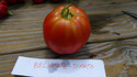 Here is the Belmonte tomato, Solanum lycopersicum This Italian heirloom tomato from the province of Cosenza in Calabria, are variable in shape and often has an elongated neck so it is more of a bell Bartlett pear shape. These Belmonte tomato seeds originated straight from an Italian seed company. Because of the unusual shape, we thought this Belomnte was in the piriform large pear group of tomatoes. After reading more in Italian, they seem to describe it as a Oxheart Marmande type cross which would explain the variable shape with ribbing. They are meaty and good for canning, but not as dry as pastes so good for fresh eating too. Open polenated, 75 days.