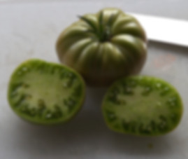 Here is the Aunt Ruby's German Green Tomato, Solanum lycopersicum, and was introduced by Ruby E. Arnold in 1915. This tomato is a beefsteak type tomatoes and can get to about 1-2 pounds, green with a blush of pink on the bottom when fully ripe. They are crack-resistant with smooth skinned fruits and a nice balance of sweet and tangy flavor which makes a great tomato sauce. A good northern climate tomato variety. Resistance to fusarium wilt and verticillium wilt. Indeterminate. Open pollinated 80 days.