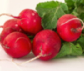 Here is the Cherry Belle Radish, Raphanus sativus. It is an early season radish with crunchy round red roots. Often referred to as a bunching radish because they can be grown very closely together and get to around 3/4 inches round with its bright red skin and creamy white flesh. These are also widely use for fresh sprouts and are great added to salads. We found these to be less spicy then other radishes and have a nice smooth flavor. Radishes can be useful as companion plants for many other crops, probably because their pungent odor deters such insect pests as aphids. This is a great starter vegetable for new gardeners. Open pollinated, 40 days.