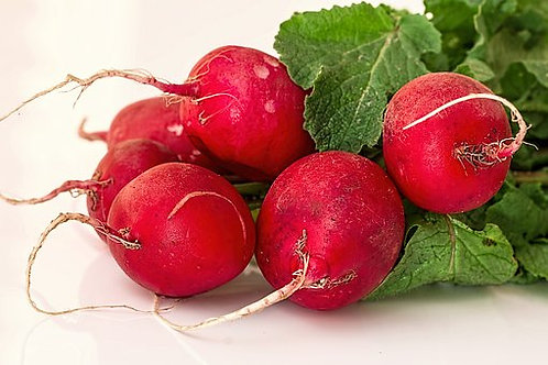 Here is the Cherry Belle Radish, Raphanus sativus. It is an early season radish with crunchy round red roots. Often referred