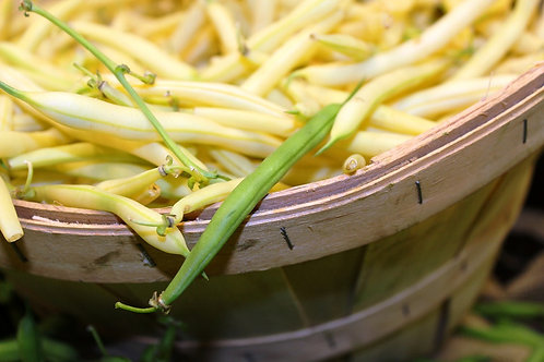 Here is the Golden Wax Bush Bean, Phaseolus vulgaris. Wax bush beans comprise only about 3% of the total snap bean market, an