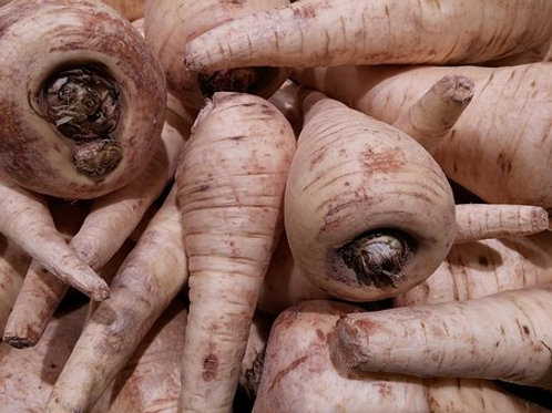 Here is theHarris Model Parsnip, Pastinaca sativa.This biennial is the number 1 choice for parsnip selection. They are the