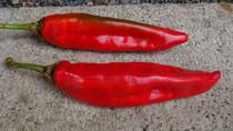 puya pepper
