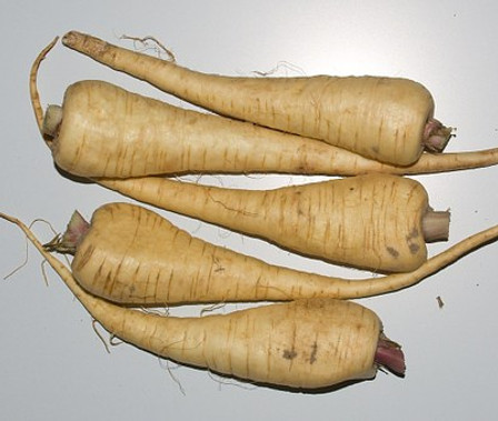 Here is the Hollow Crown Parsnip, Pastinaca sativa. Some confuse this variety with the Parsnip Guernsey variety but in fact it is not the same but with a longer and wider root. This was a popular variety in the 1820's with very long cream colored roots that get to around 8 to 12 inches long and 2 to 3 inches wide! The plant can grow as tall as 6+ feet tall if left growing in it's second year. This is a biannual so make sure you harvest it the first year in late fall or early spring for best flavor. They have a sweet taste better then a carrot! Best to harvest them in colder weather for sweeter roots. Open pollinated start in June and harvest in late September or early spring before it bolts. 120 days.