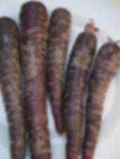Black Spanish Carrot