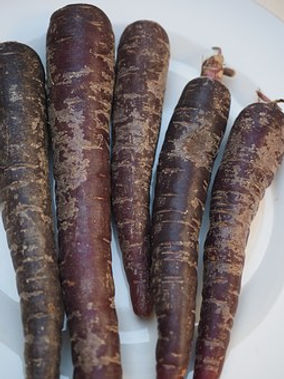 Here is the Black Spanish Carrot,Daucus carota subsp. sativus.This long black carrot sometimes called chantenay carrot is a Spanish heirloom. These long and stout carrots are Black on the out side but lite yellow to orange inside.The roots grow to 6 to 14 inches long and can get as wide as 2 inches at the top. They are a cool weather carrot and bolts easy in warmer weather even in the first year. best to grow them in the fall months. They can be used like any other carrot and go great in soups and steamed as well! These carrots grow well in soft loamy soil. Open pollinated 65 to 80 days.
