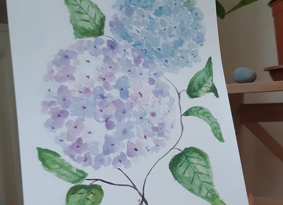 Hortensia / Breton Hydrangea- Reproduction -