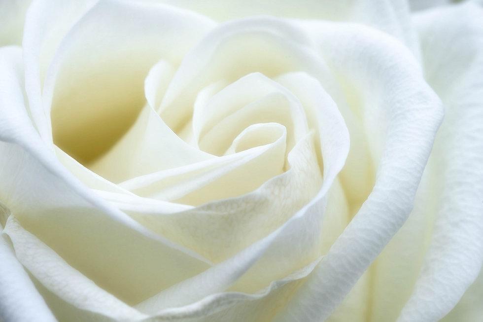 rose-1033202_1920.jpg