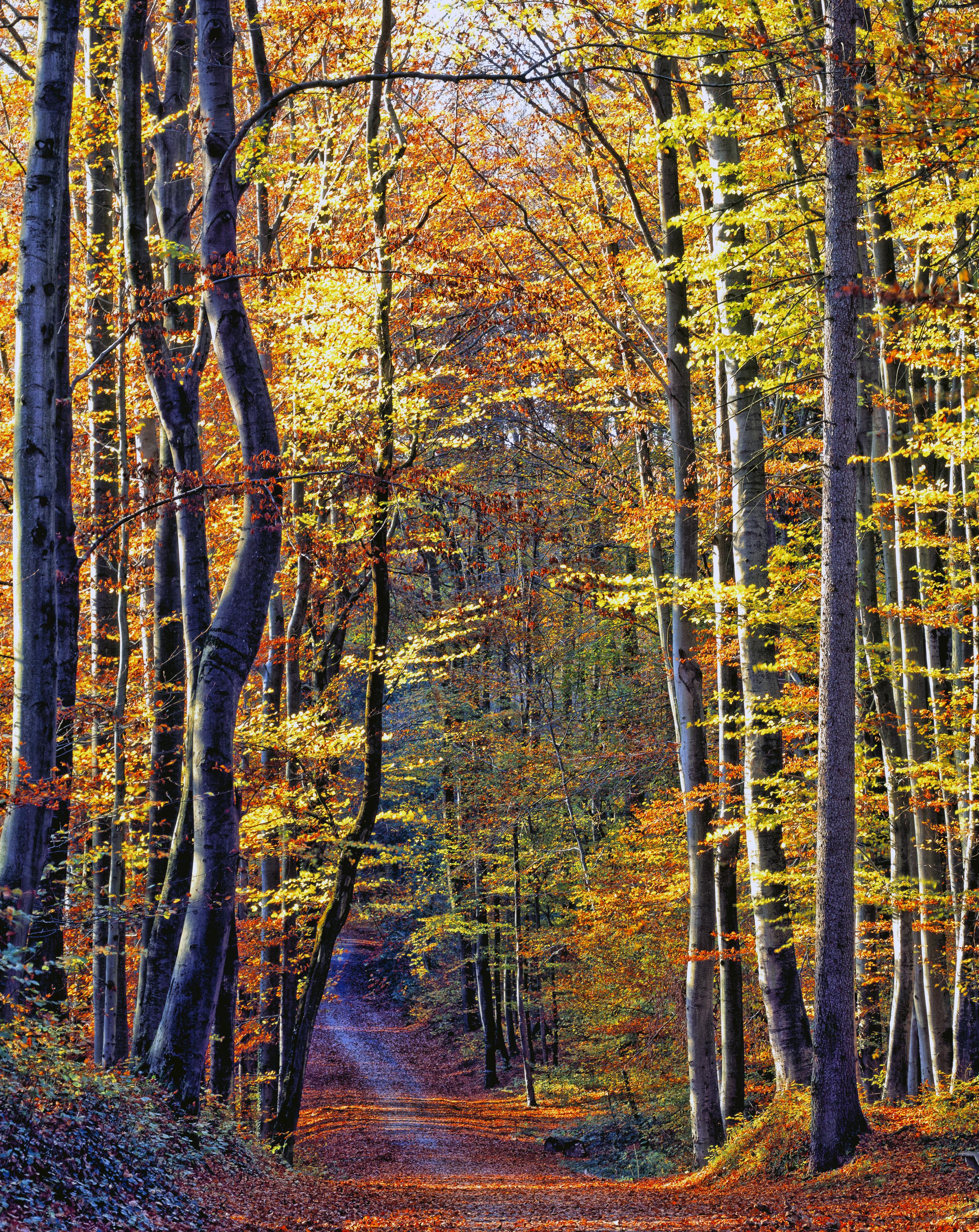 autumn forest on the Rührberg