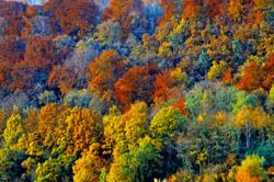 autumn forest, Grenzach-Wyhlen