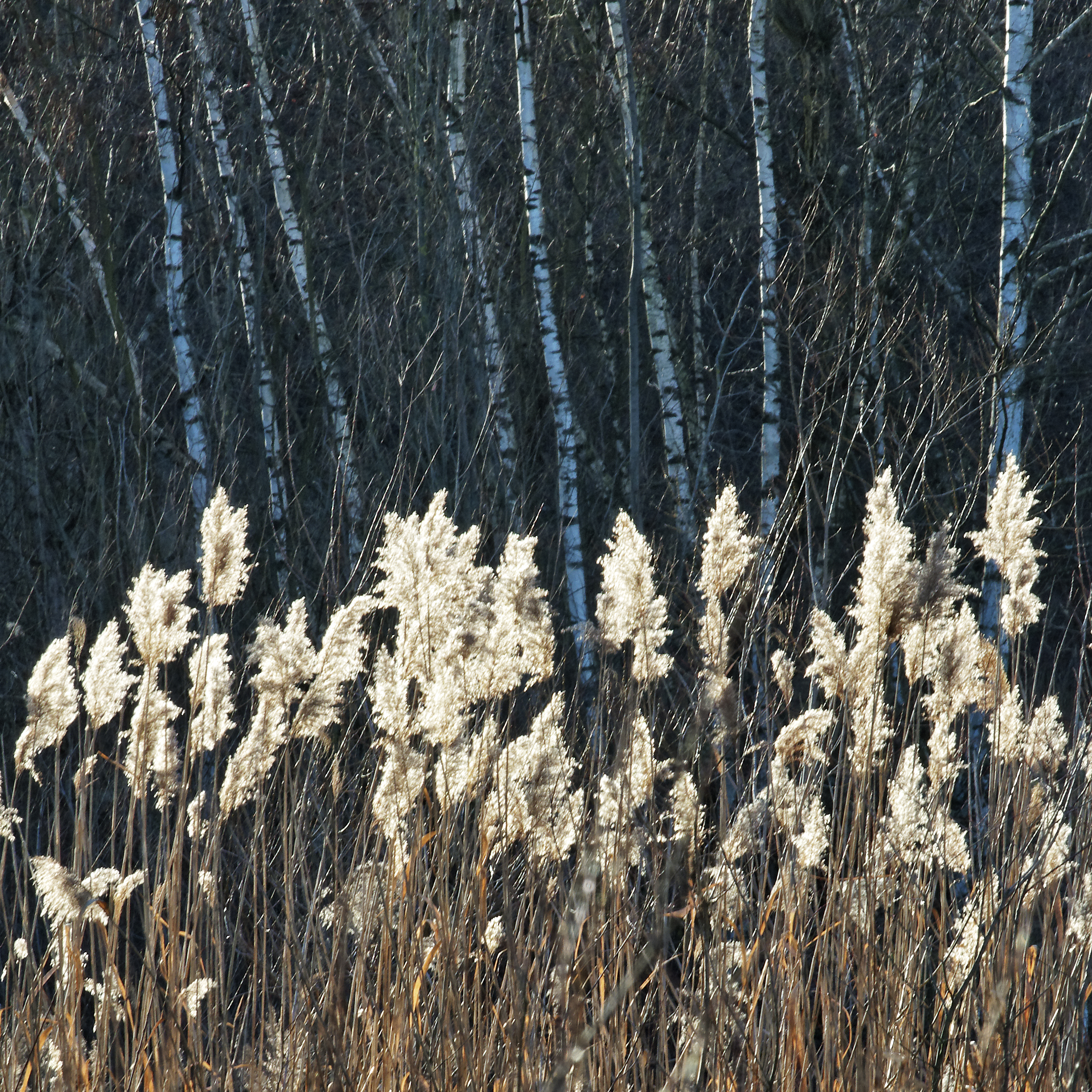 biotope, Grenzach-Wyhlen