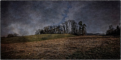 nocturnal landscape 1