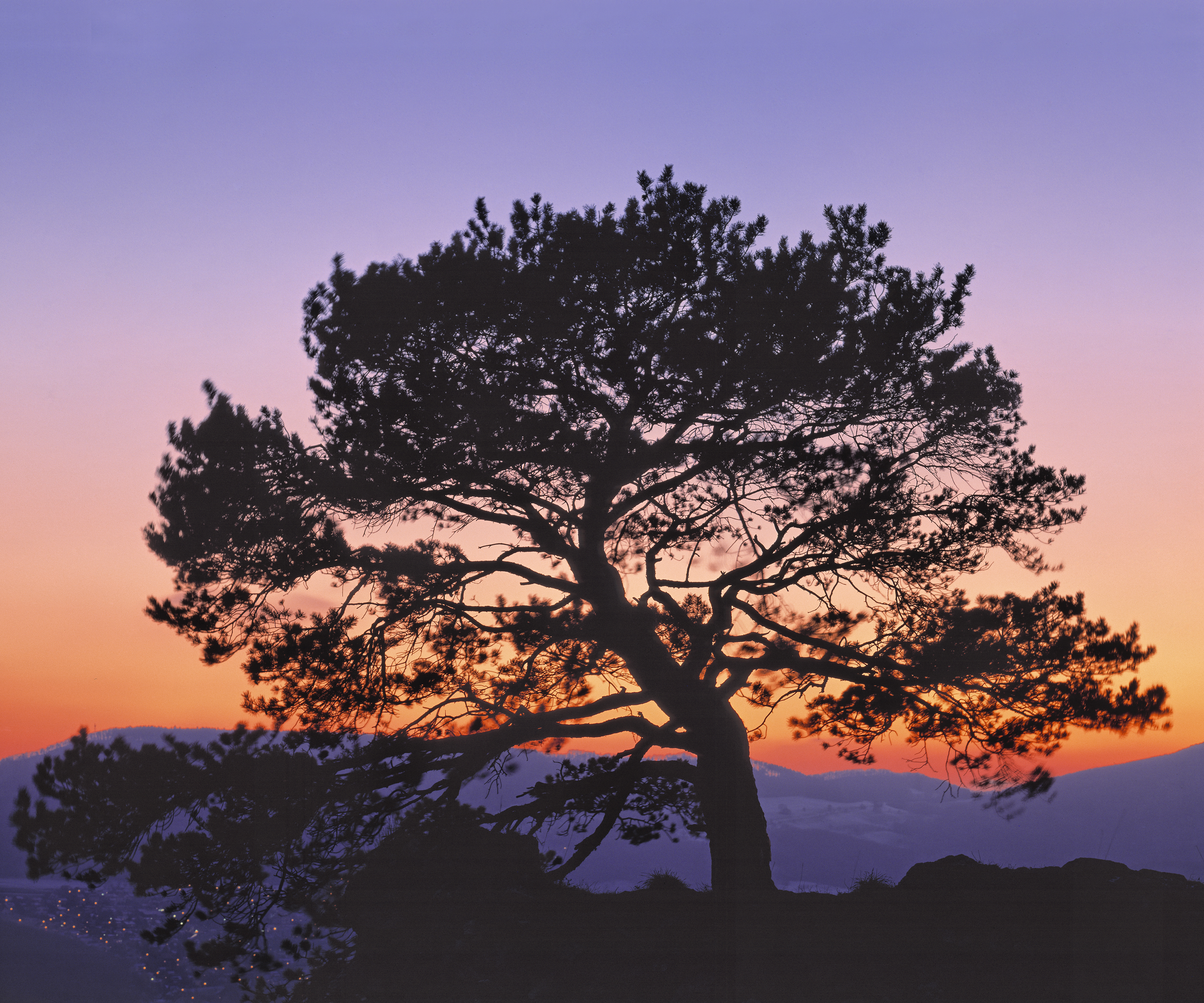 majestic tree, near Dornach