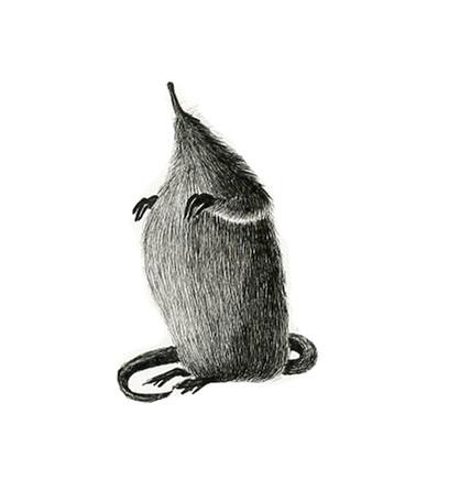 Russian desman mole