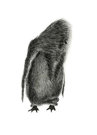 Kind penguin