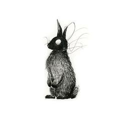 San Jose rabbit