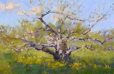 Ann Gillespie Apple Blossoms 21.jpg