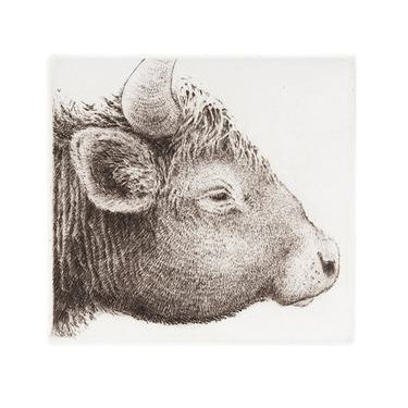 Ox Etching
