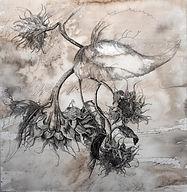 Victoria Elbroch Sunflowers 19.jpg