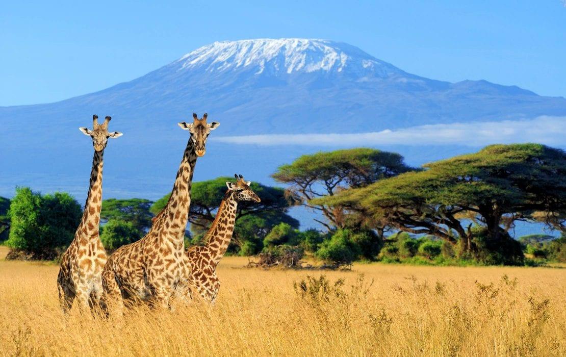 mt-kilimanjaro-1110x700.jpg