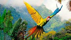 Viaja a Costa Rica