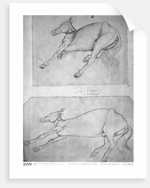 Pisanelo dead donkey.jpg
