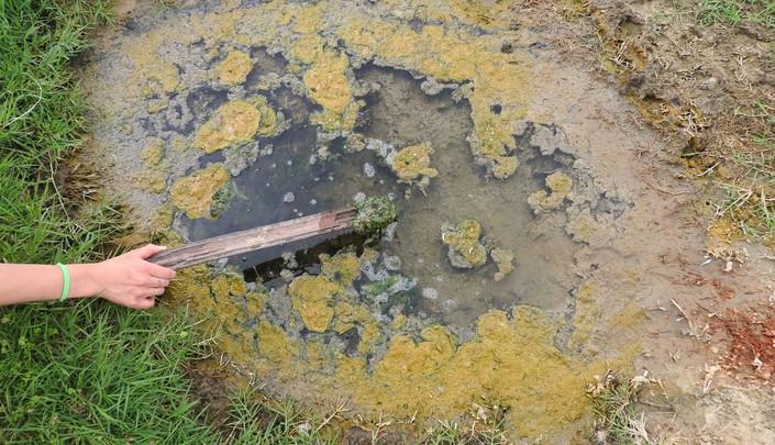 sampling freshwater tub