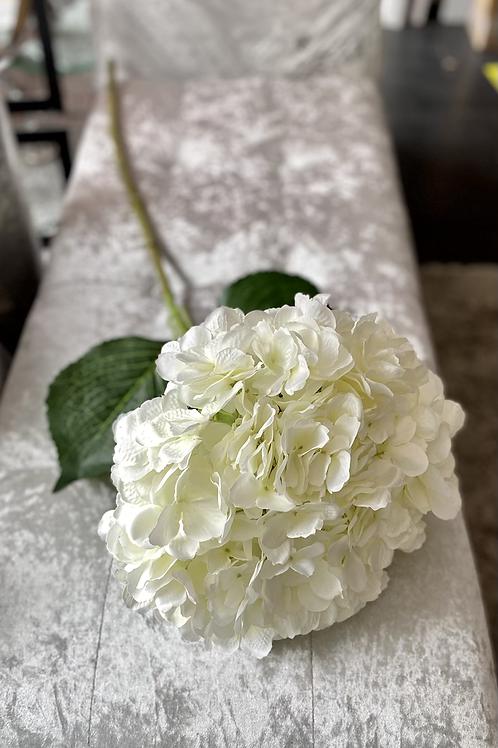 Giant Hydrangea Stem Cream