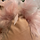 Thumbnail: Pink Velvet Cushion with Feather Trim - 45 cm