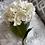 Thumbnail: Giant Hydrangea Stem Cream