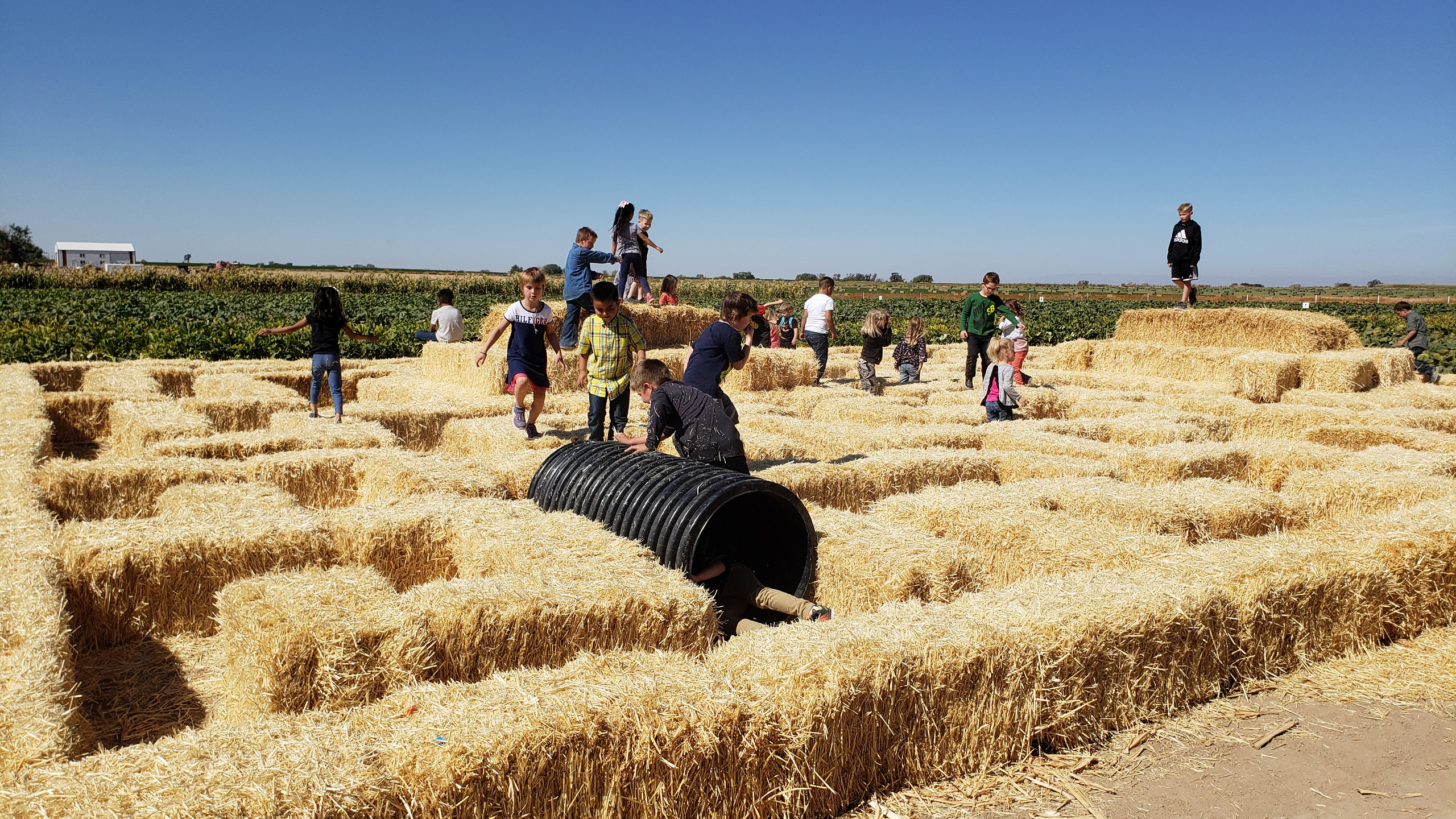 PES Students play in the pumpkin patch hay maze.