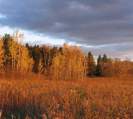 Autumn.Scuppernong.jpg