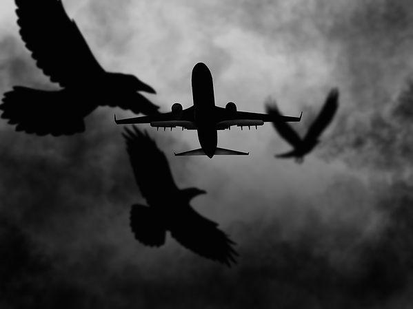 6-Plane.jpg