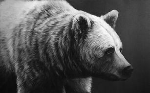 Bear 1 1-6117.jpg