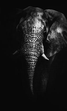 African Elephant - Mathias Horne.jpg