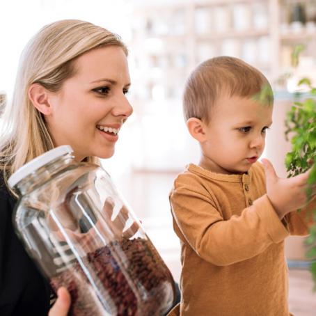 ¿Cómo Empezar una Vida más Sustentable?
