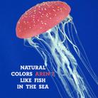 sbucan mare con scritta.png