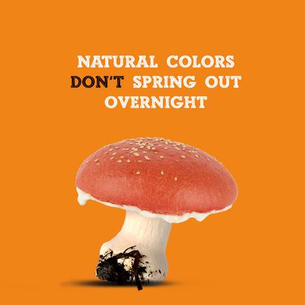 funghi con scritta.png