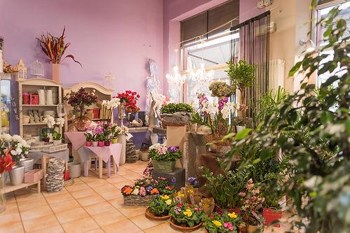Petali Flower Designer interno