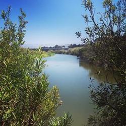 Ocean Creek and Waterway