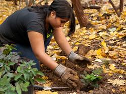 Restoration Planting w/ Youth