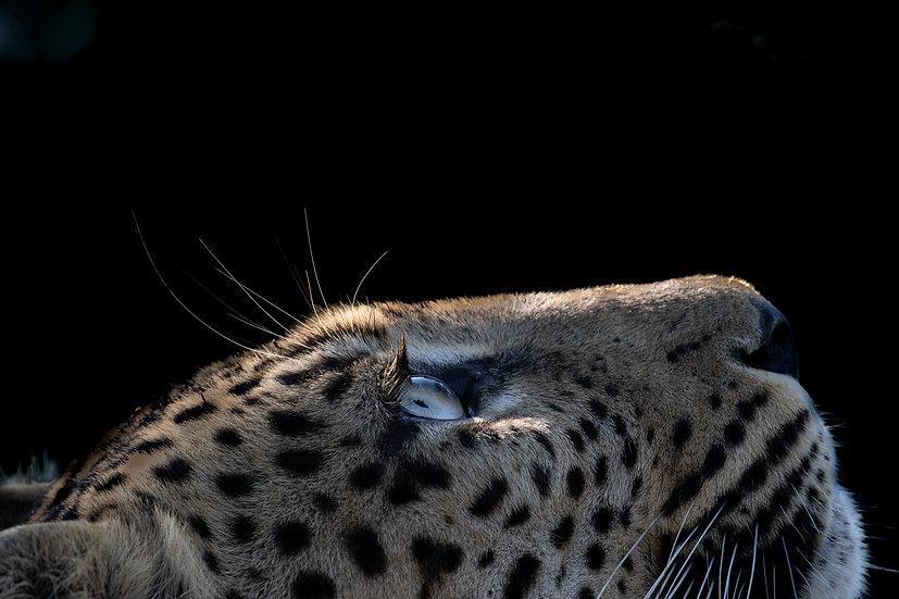 Nick Kleer  | Looking up