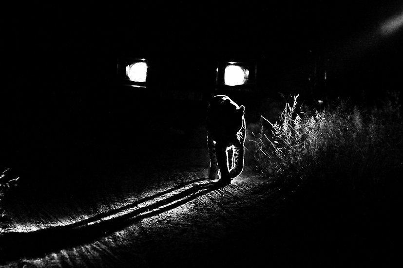 Jonty Bozas | Shadows and Dust