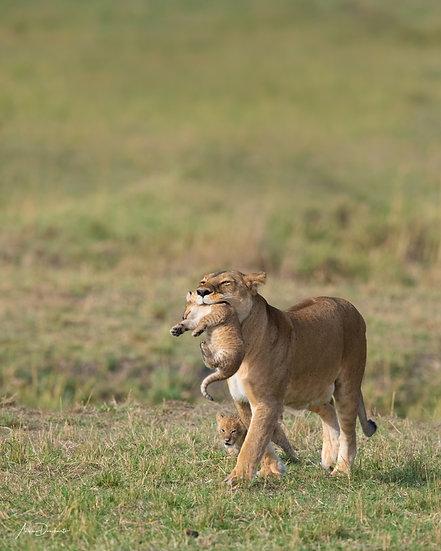 Andrew Dankwerts | Cub Carry