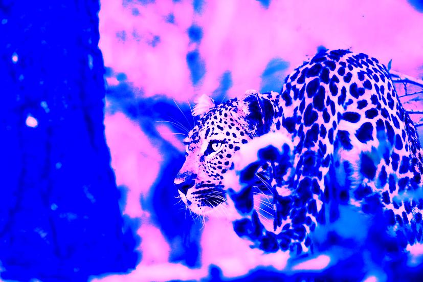 Jonty Bozas | Funky Leopard