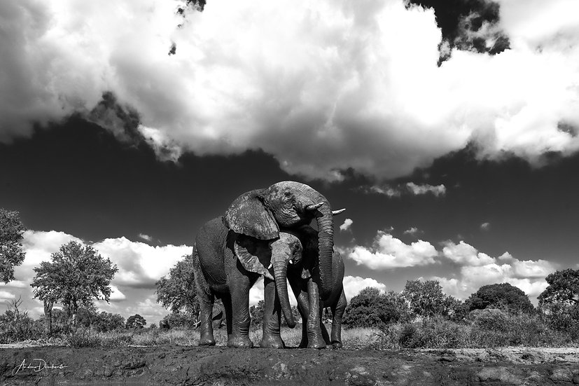 Andrew Dankwerts | Under African Skies
